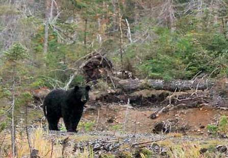 Image-galerie_chasse-ours-1_447x309